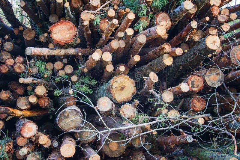 Bossenbestand in de houtverwerkende sector in de houtverwerkende sector - bosbouw en verwoesting royalty-vrije stock afbeeldingen