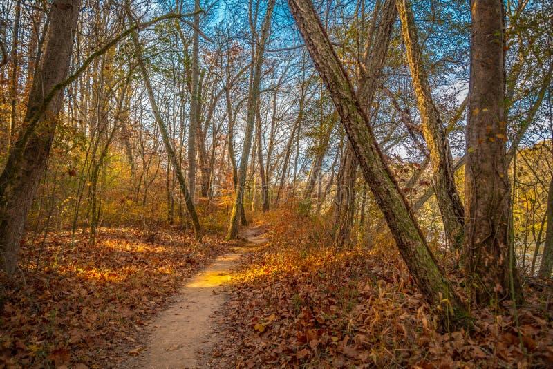Bosslepen in de herfst op een zonnige dag royalty-vrije stock afbeelding