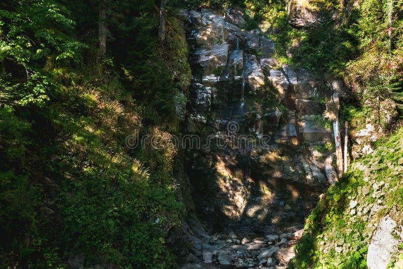 Bosstroom die onderaan hoge rotsachtige waterval gaan royalty-vrije stock fotografie