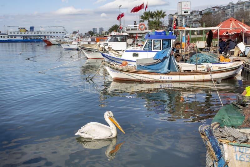 Bostanli/Karsiyaka/Smirne/Turchia, il 15 febbraio 2019, riparo di Fisher, pellicano immagini stock libere da diritti