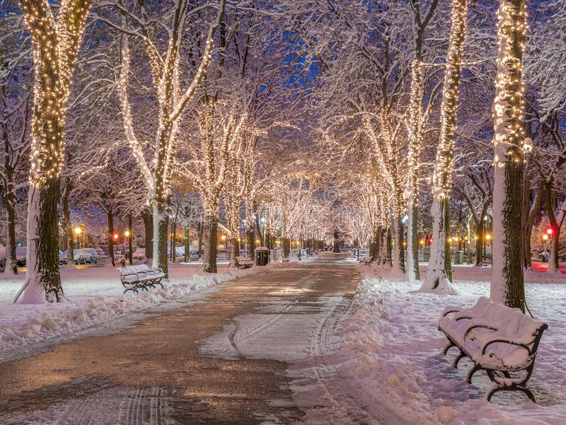 Boston Christmas Lights. The architecture of Boston in Massachusetts, USA at night by Commonwealth Avenue with Christmas Lights and snow royalty free stock images