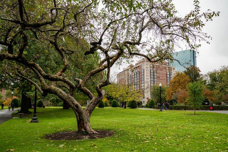 Boston Common Boston Common är den äldsta stadsparken i Förenta staterna arkivbilder