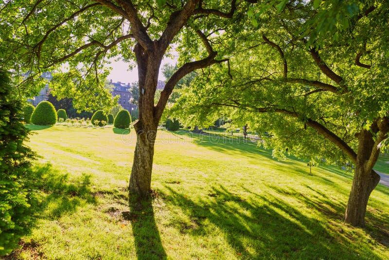 Boston Common public garden tree Massachusetts stock photography