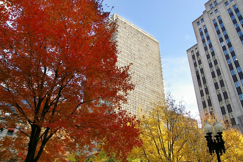 Boston fall foliage. Brightly colored Fall foliage in downtown Boston stock photography