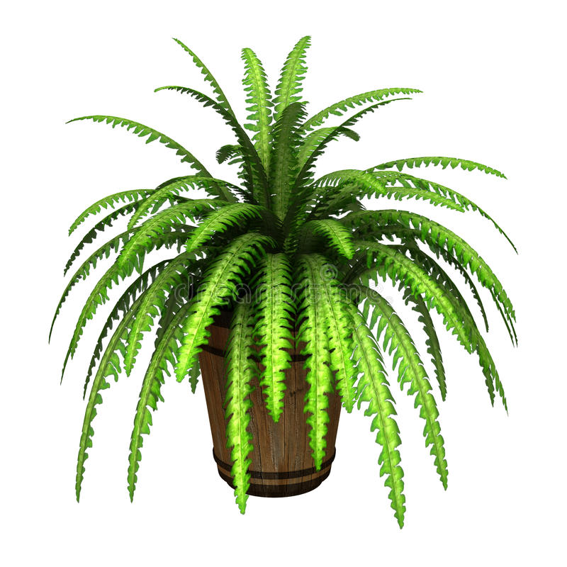 Boston Fern. 3D digital render of a green boston fern in a flower pot isolated on white background vector illustration