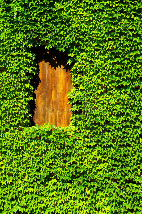 Free Boston Ivy Stock Photo - 8510550