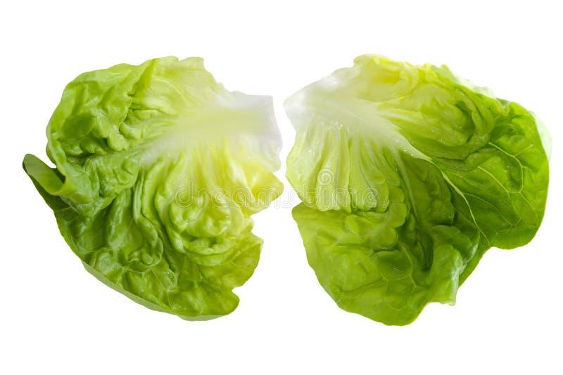 Boston Lettuce Royalty Free Stock Image