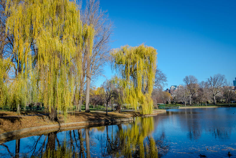 Boston offentlig trädgård - Boston, Massachusetts, USA royaltyfri bild