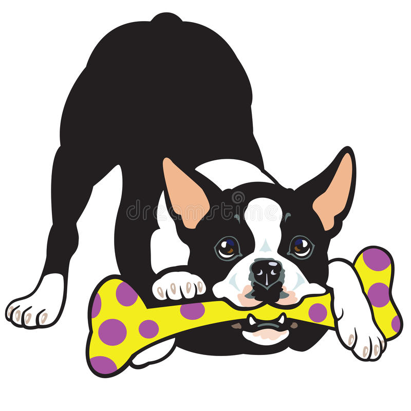 Download Boston terrier stock vector. Image of black, animal, adorable - 27810793