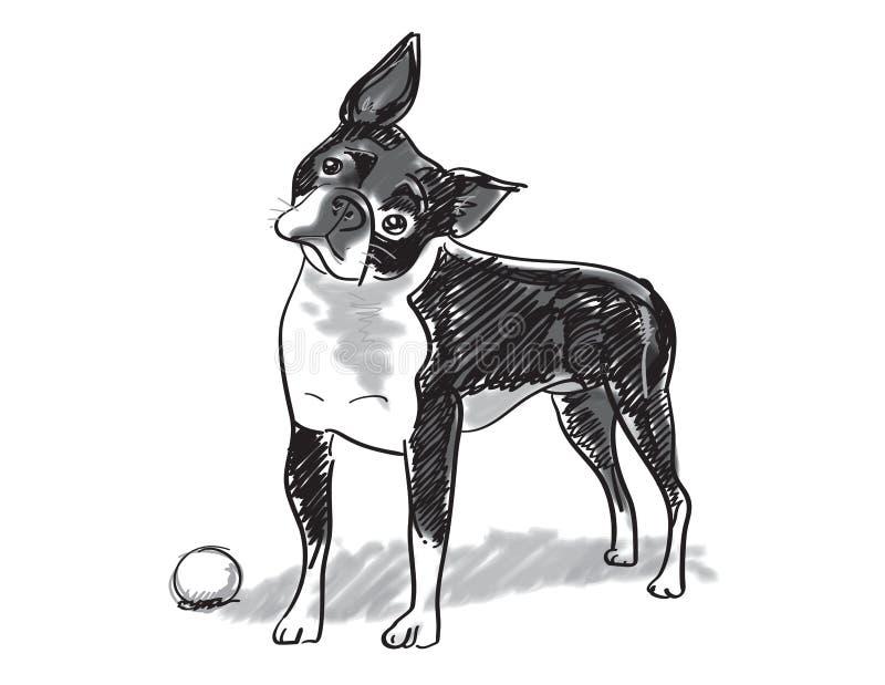 Boston Terrier ilustracja wektor