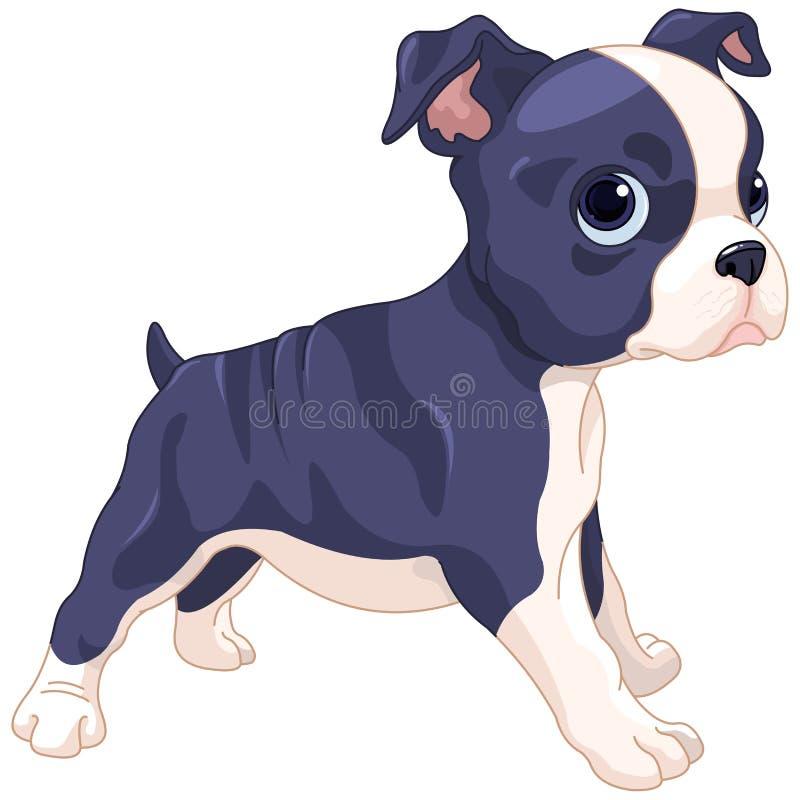 Boston Terrier Cub libre illustration