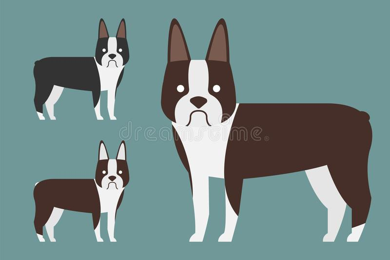 Boston Terrier Hundtecken angus Vektorillustrationdesig vektor illustrationer