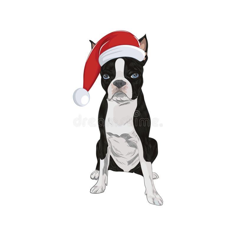 Boston Terrier que veste o chapéu de Santa isolado no fundo branco ilustração do vetor