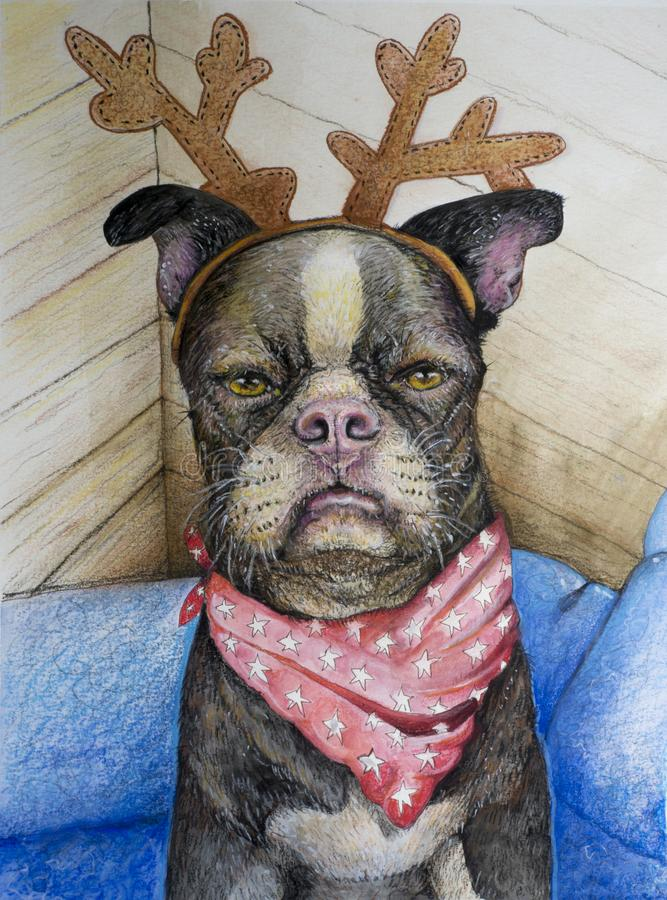 Boston Terrier with Reindeer antlers. A hand drawn Boston terrier dog with Christmas reindeer antlers on his or her head and a star filled bandanna wrapped stock illustration