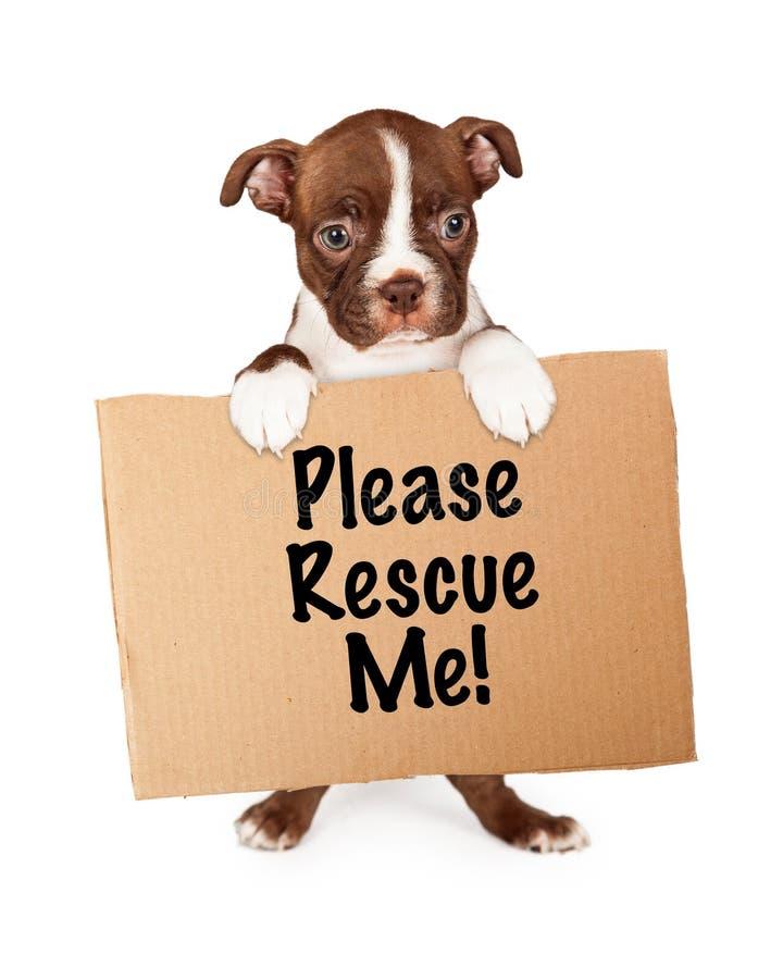 Boston Terrier szczeniaka mienie Adoptuje Ja Szyldowy zdjęcia stock