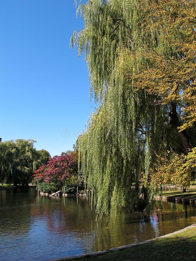 boston trädgårds- allmänhet arkivbild