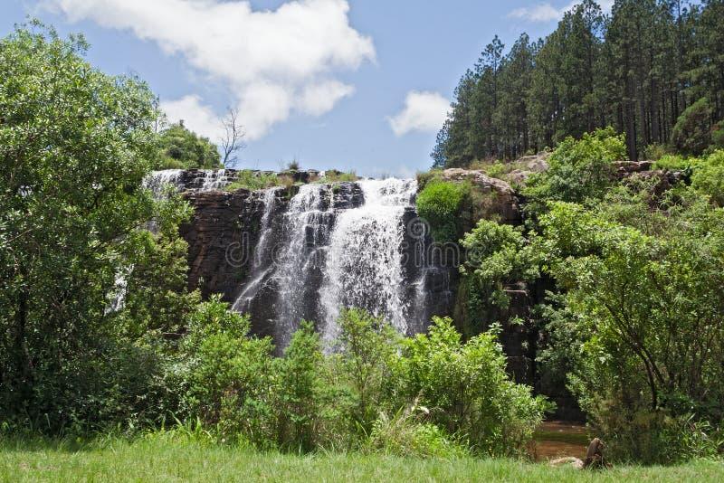 Bosval van de MAC-rivier van MAC in het noorden van sabie, Zuid-Afrika stock foto
