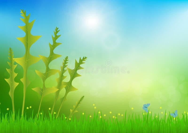 Bosvaren in weide met zacht helder bokeh en zonlicht, verse groene aardachtergrond stock illustratie