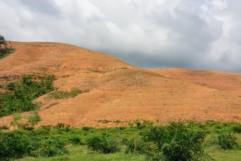 Bosvernietigingsprobleem aangaande de heuvel voor palmolieaanplantingen in Thailand royalty-vrije stock fotografie