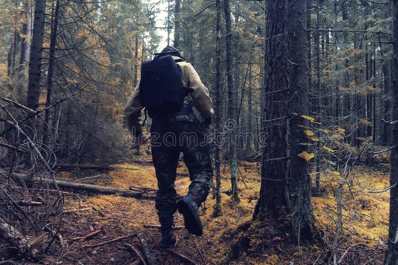 Boswachter in de herfstbos stock afbeeldingen