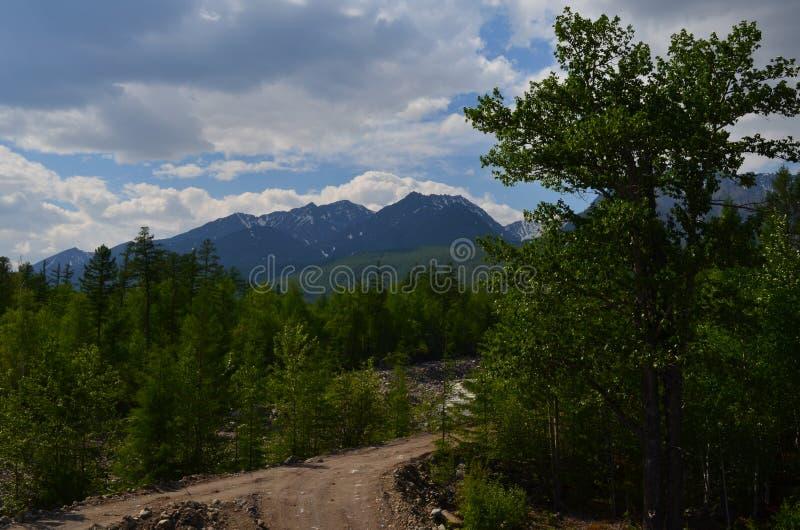 Bosweg aan avonturen bij Siberische alpen stock foto's
