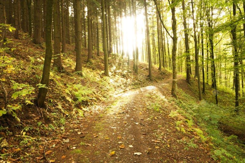 Bosweg in de herfst royalty-vrije stock afbeelding