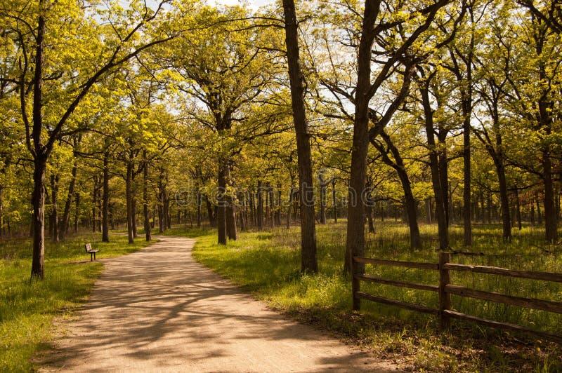 Bosweg in de lente royalty-vrije stock afbeeldingen