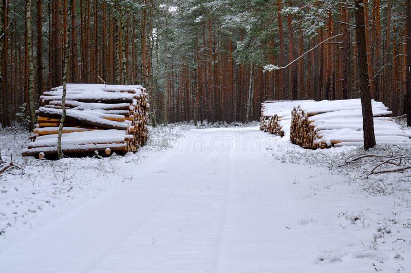 Bosweg in de winter stock foto