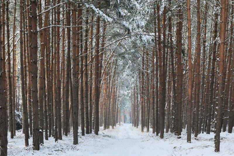 Bosweg in de winter royalty-vrije stock afbeeldingen