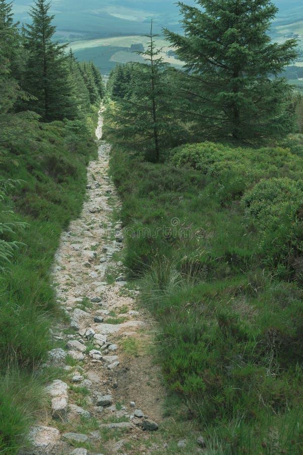 Bosweg die door de bergen bergaf gaan royalty-vrije stock foto