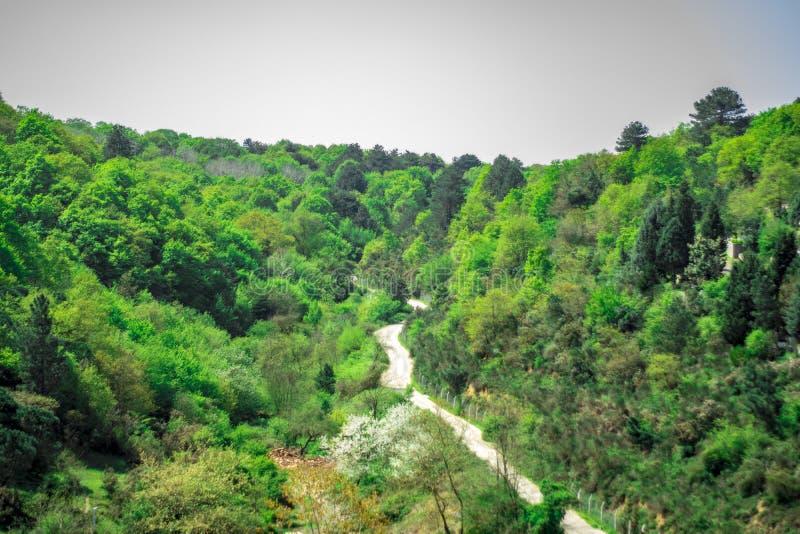 Bosweg in Istanboel stock foto's