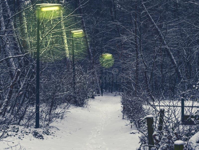 Bosweg met aangestoken lantaarnpalen op een koude en sneeuw de winternacht stock afbeeldingen