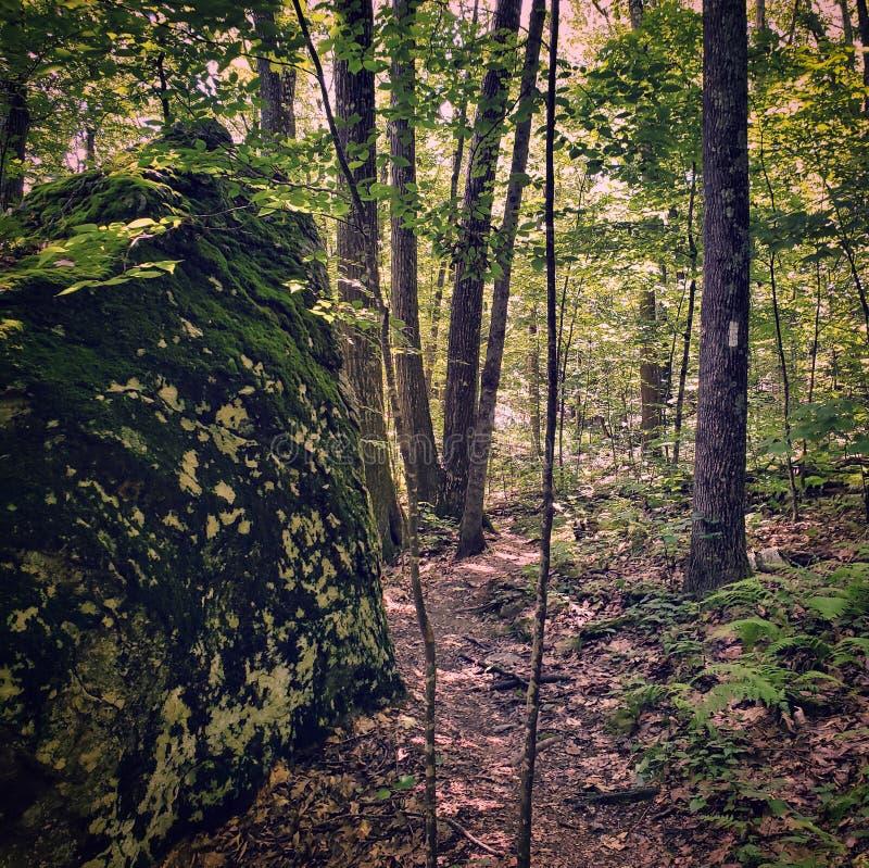 Bosweg met reus bolder omvat in mos royalty-vrije stock fotografie