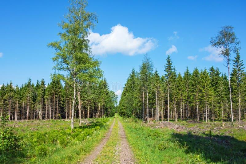 Bosweg over een clearcutting gebied stock afbeeldingen