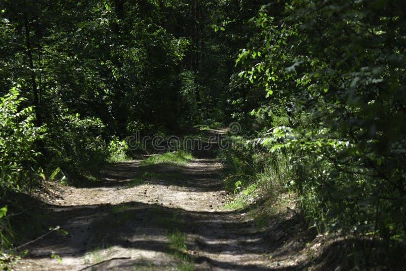 bosweg voor het aanstoten of het cirkelen in de zon stock foto