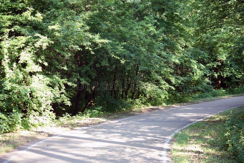 bosweg voor het aanstoten of het cirkelen in de zon royalty-vrije stock afbeeldingen