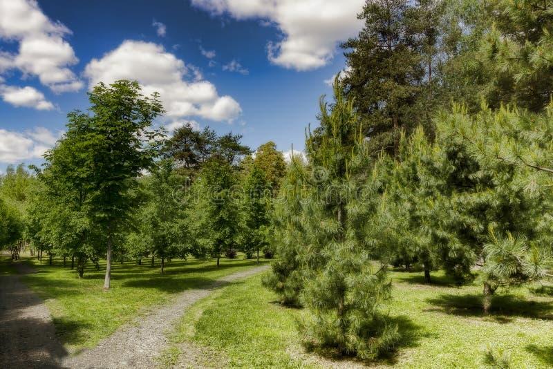 Bosweg in zonnig stock fotografie