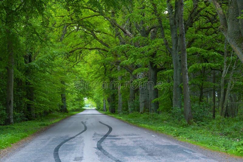 Boswegbomen bij het platteland, de sporensporen van de banden van de autoband op de weg, bosboomschaduw stock afbeeldingen