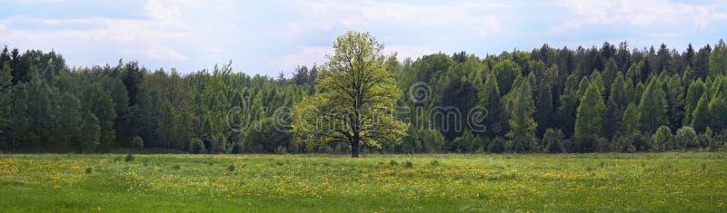 Bosweide eenzame boom royalty-vrije stock afbeeldingen