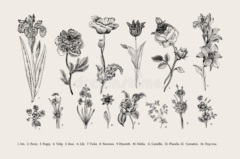 botánica conjunto Flores de la vendimia stock de ilustración