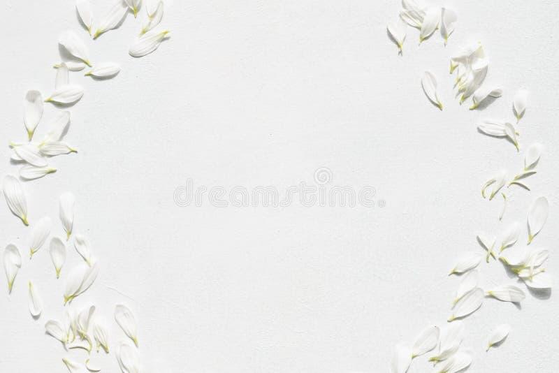 Botánica delicada blanca de la guirnalda del pétalo del flor de la margarita imagenes de archivo