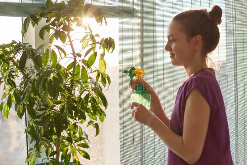 Botánica, quehacer doméstico y concepto del tratamiento de la planta La hembra joven linda hermosa sostiene el pulverizador con a fotos de archivo