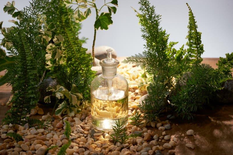 Bot?nica org?nica natural e produtos vidreiros cient?ficos, medicina alternativa da erva, produtos de beleza naturais dos cuidado imagens de stock