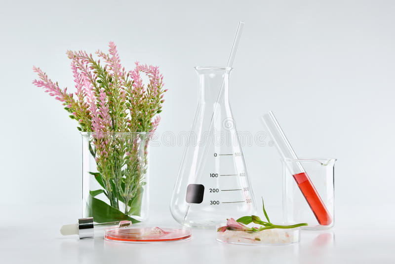 Botânica orgânica natural e produtos vidreiros científicos, medicina alternativa da erva, produtos de beleza naturais dos cuidado imagem de stock royalty free