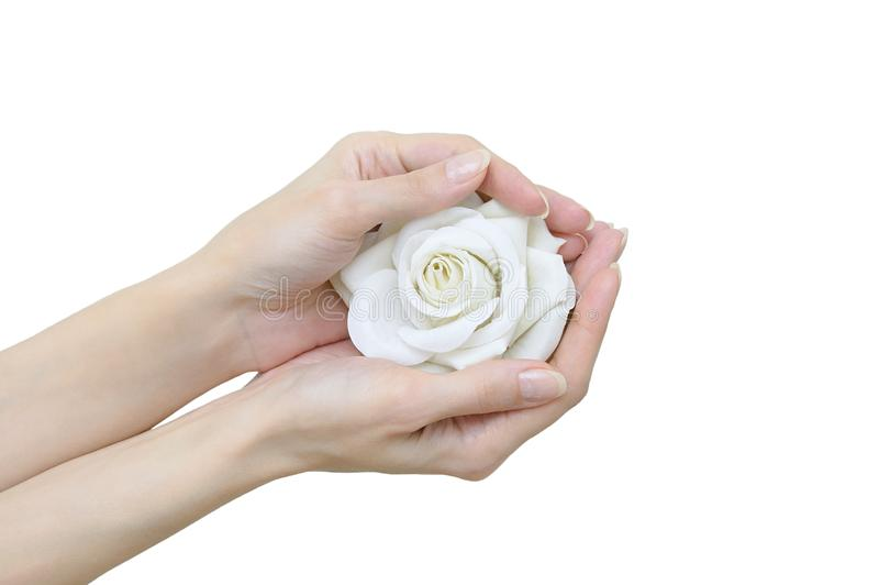 Botão cor-de-rosa branco à disposição Close-up foto de stock royalty free