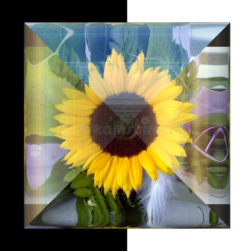 botão 3D quadrado lustroso com flor real imagens de stock