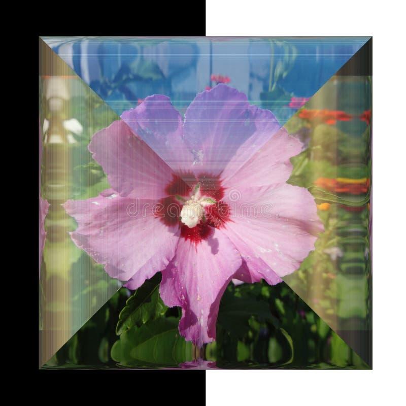 botão 3D quadrado lustroso com flor real foto de stock