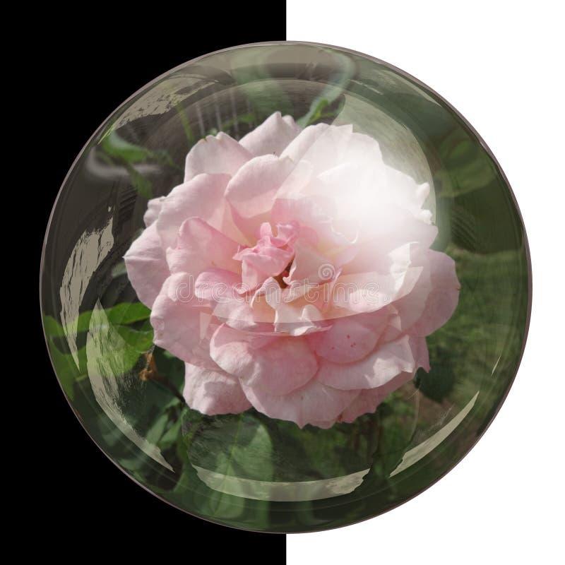botão 3D redondo lustroso com flor real imagem de stock