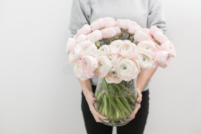 Botão de ouro persa Grupo pálido - o ranúnculo cor-de-rosa floresce em um vaso na mão da mulher o trabalho do florista em um flor fotografia de stock royalty free