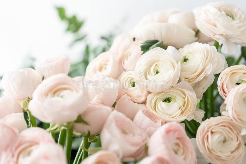 Botão de ouro persa nos vasos de vidro Grupo pálido - o ranúnculo cor-de-rosa floresce o fundo claro wallpaper Flores da estação  foto de stock royalty free
